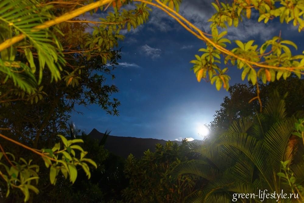 Маврикийские фотохроники