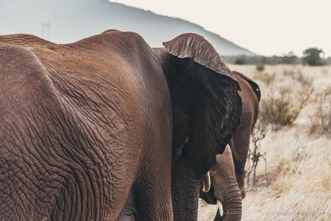 Национальный парк Цаво в Кении