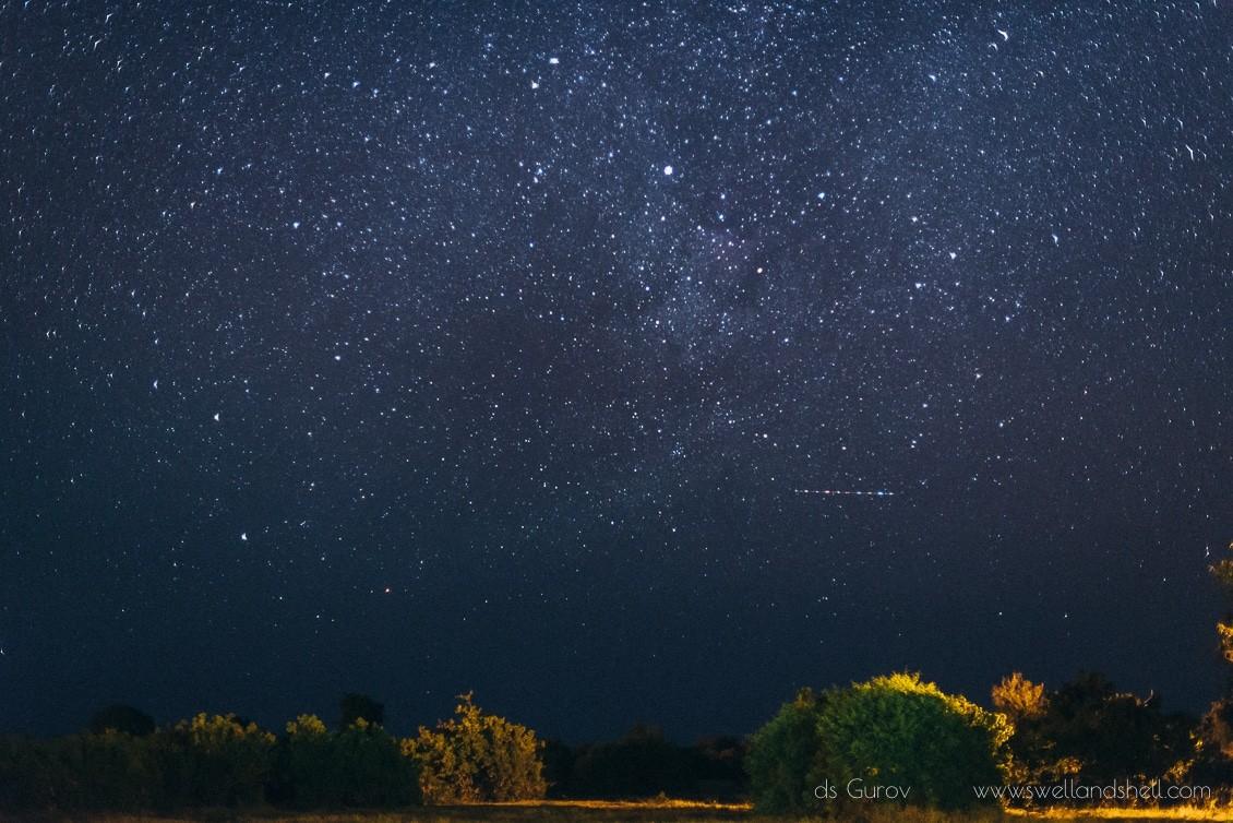 звёзды в африке