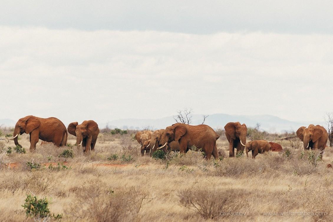 красные слоны
