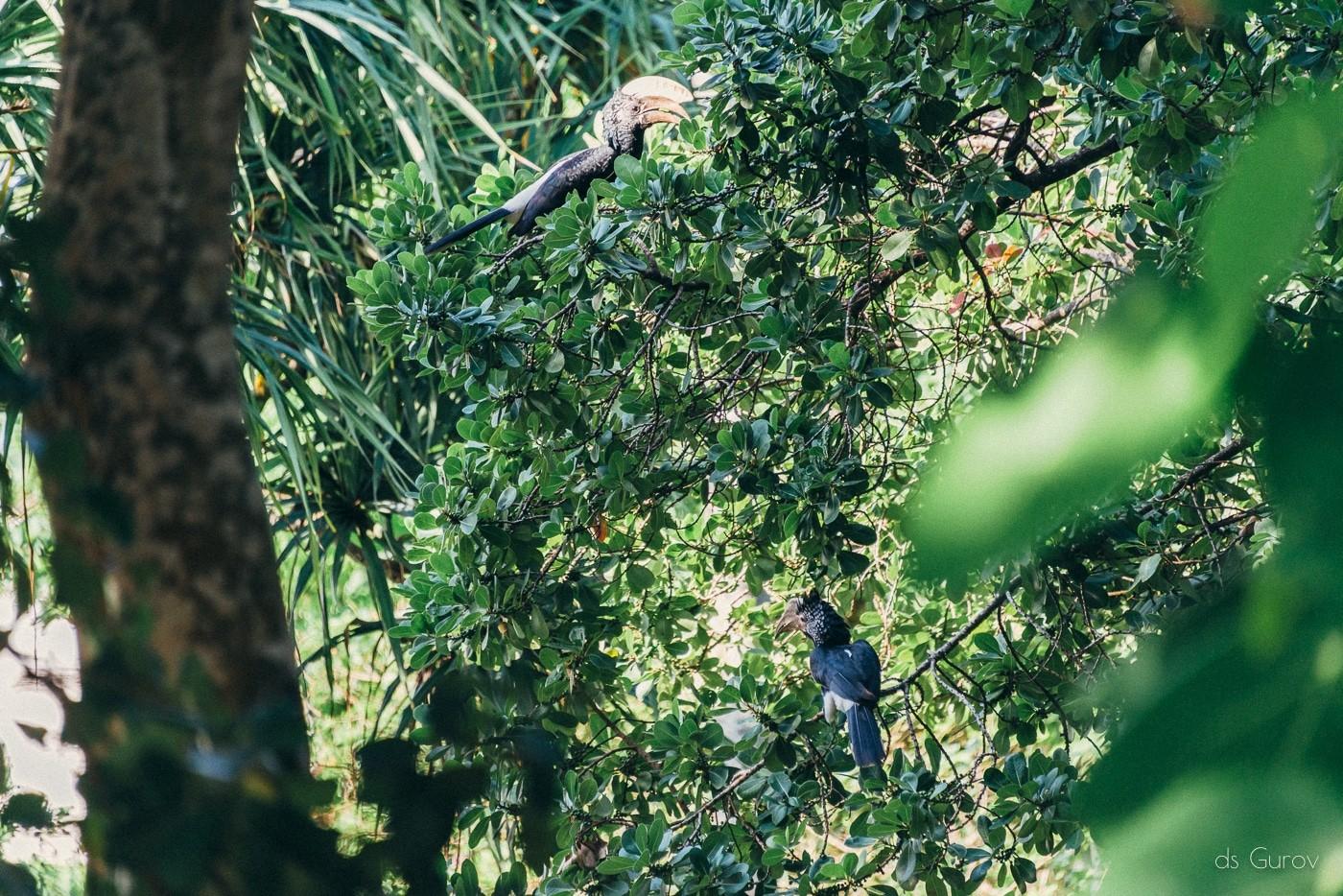 птицы кении
