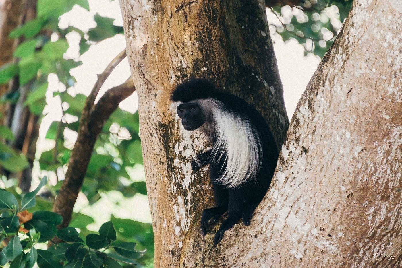 животные кении