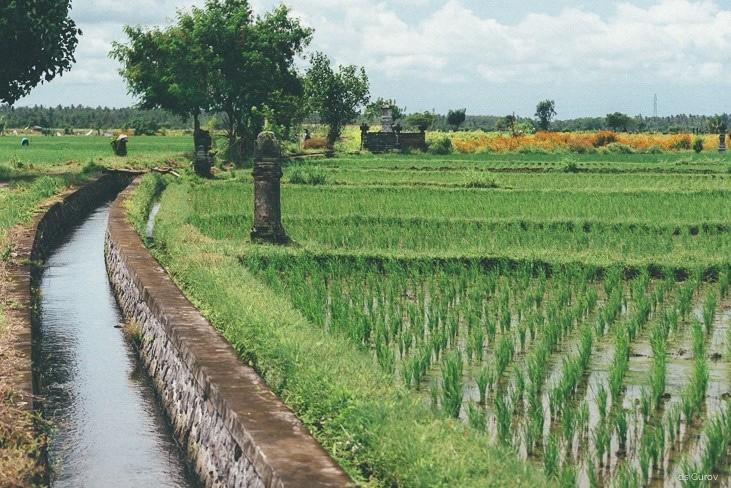 подношения богам в рисовых терассах