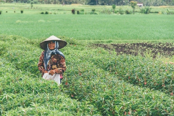 в рисовых полях бали