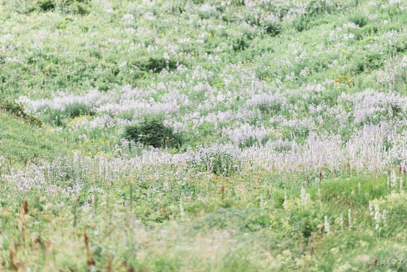 разнотравье в Красной поляне