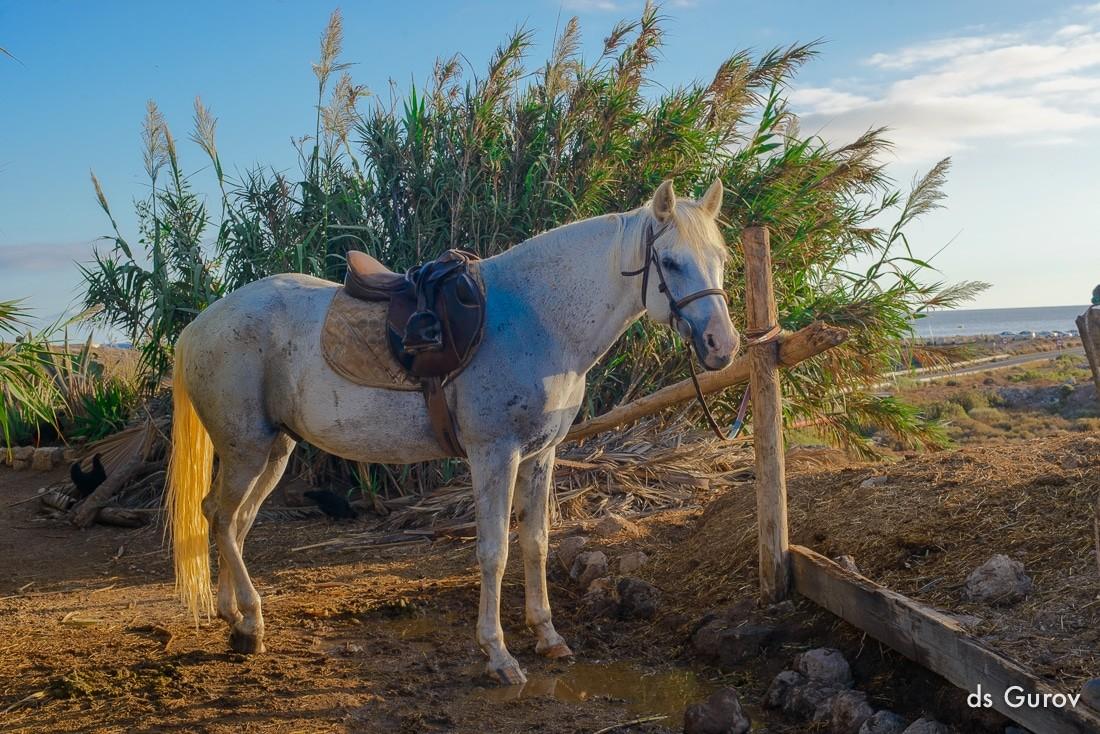 Tenerife daily: прогулка на лошадях