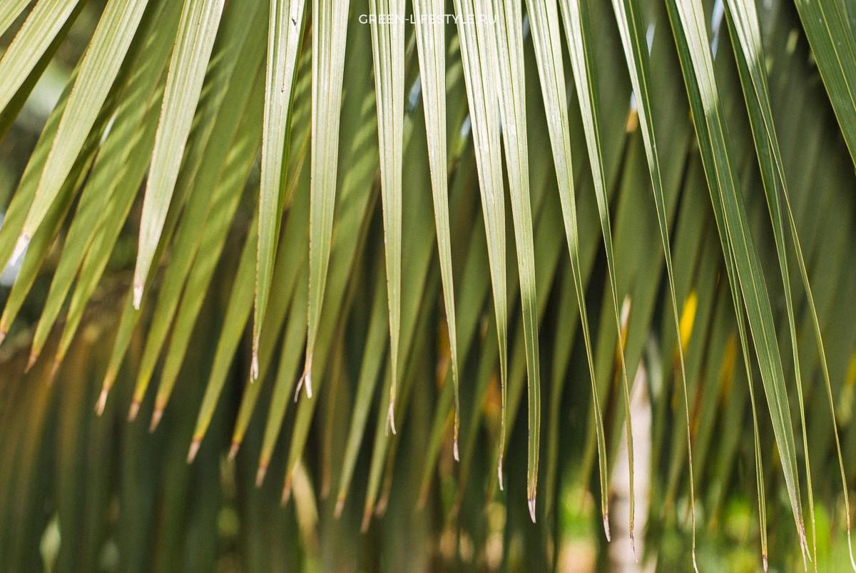 Эко финка: сады и банановая роща